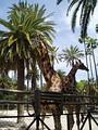 Зоологический парк Херес