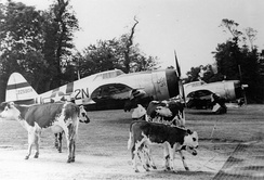 81st Fighter Squadron P-47D at Carentan Airfield (A-10), France, Summer 1944.[note 4]