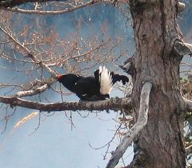 Самец на дереве