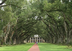 The avenue of live oaks at Oak Alley Plantation in Vacherie, Louisiana, planted in the early 18th century.