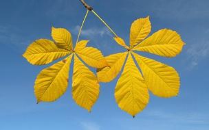 Листья осенние