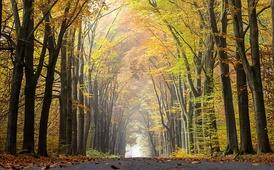 Аллея парка в Германии осенью