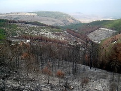 A burnt forest in northern Israel caused by Hezbollah rockets