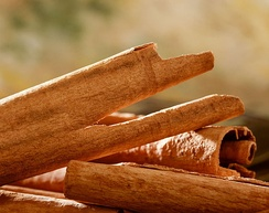 Close-up view of raw cinnamon