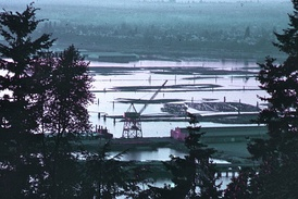 The harbor of Bellingham, Washington, filled with logs, 1972