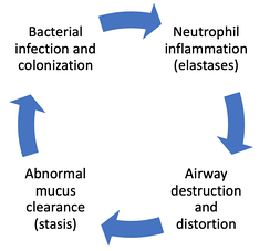 """Vicious cycle"" theory of the pathogenesis of bronchiectasis."