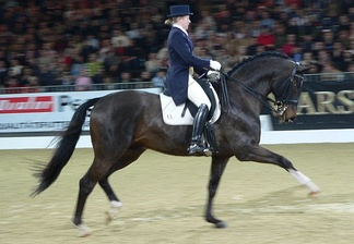 Тракененская лошадь на выступлении по выездке.