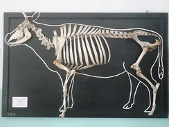 Bones are mounted on a black board