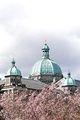 BC Legislative Building with Cherry Trees in Bloom, Victoria, British Columbia