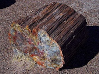 Petrified wood in Petrified Forest National Park, Arizona