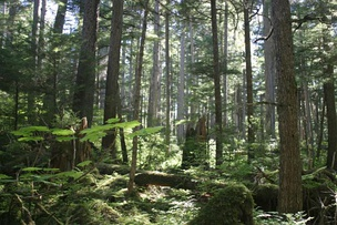 The Tongass National Forest in Alaska is managed by the United States Forest Service