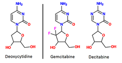 Deoxycytidine (left) and two anti-metabolite drugs (center and right); gemcitabine and decitabine. The drugs are very similar but they have subtle differences in their chemical structure.