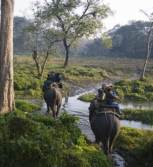 An elephant safari through the Jaldapara National Park in West Bengal, India