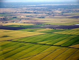 Rice paddy fields just north of the city of Sacramento, California.