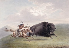 A bison hunt depicted by George Catlin