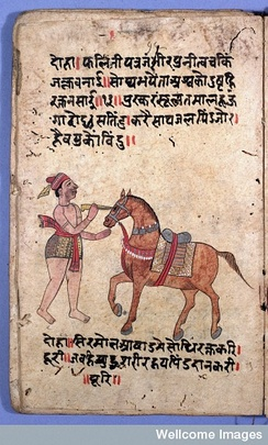Ancient India text, eye operation on a horse