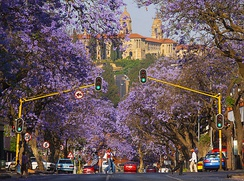 A street lined with jacarandas in Pretoria, with the Union Buildings atop Meintjieskop in the background