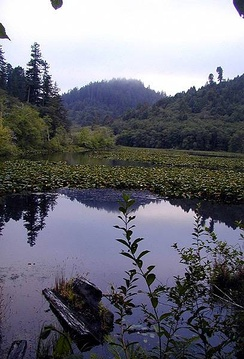 Marshall Pond near the Klamath River, Redwood National and State Parks.