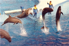Sea World show featuring bottlenose dolphins and false killer whales