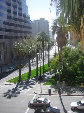 Palm trees are common throughout the city of San Jose and Silicon Valley