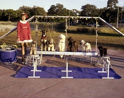 Dog act in the Sailor Circus, 1977.