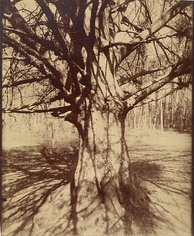 Beech Tree photographed by Eugène Atget, circa 1910–1915