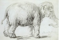 Hansken, a young female Asian elephant from Dutch Ceylon, was brought to Amsterdam in 1637, aboard a VOC ship. Rembrandt's Hansken drawing is believed to be an early portrait of one of the first Asian elephants described by science.