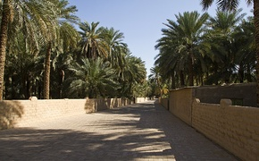 Al Ain Oasis in the city of Al Ain in the United Arab Emirates