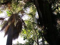 In a tropical hardwood hammock, trees are very dense and diverse.