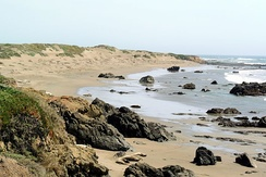 Piedras Blancas State Marine Reserve and Marine Conservation Area, an elephant seal rookery.