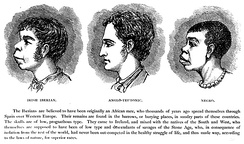 "A late-19th-century illustration from Ireland from One or Two Neglected Points of View by H. Strickland Constable shows an alleged similarity between ""Irish Iberian"" and ""Negro"" features in contrast to the ""higher"" ""Anglo-Teutonic""."