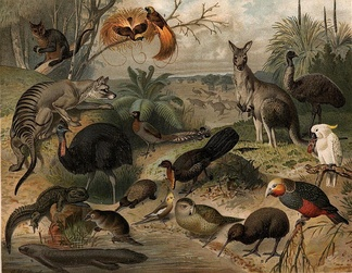 Australian and New Zealand fauna. This image was likely first published in the first edition (1876–1899) of the Nordisk familjebok.