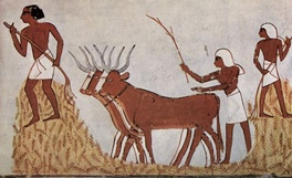 Farmers with wheat and cattle - Ancient Egyptian art 1,422 BCE displaying domesticated animals.