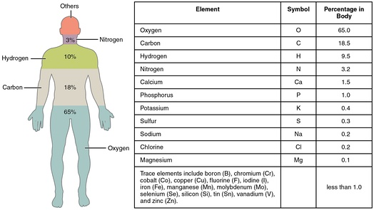 Elements of the human body by mass. Trace elements are less than 1% combined (and each less than 0.1%).