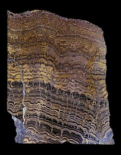 Lower Proterozoic stromatolites from Bolivia, South America