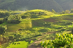 Terraced rice fields in a valley in Sa Pa