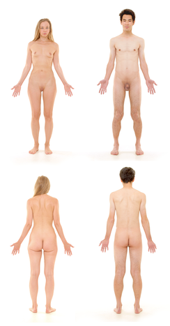 Female and male adult human bodies, depicted without pubic or facial hair