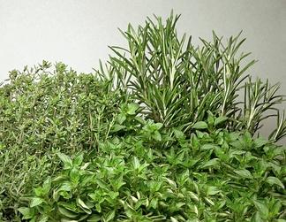 Пряная зелень (тимьян, орегано, розмарин)