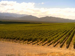 Vineyards on the Andes foothills.