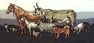 Домашние животные Древней Руси