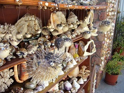 Assorted seashells, coral, shark jaws and dried blowfish on sale in Greece