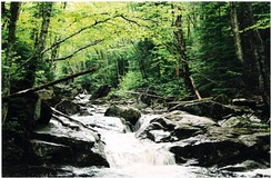 A riparian forest in the White Mountains, New Hampshire (USA) is an example of ecosystem ecology