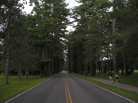 Towering trees line the Avenue of the Pines in Saratoga Spa State Park.
