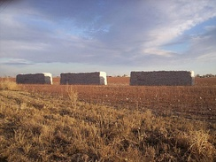 Cotton modules after harvest in West Texas