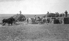 Haying operation in Nobles County 1895 (E.F. Buchanan photo)