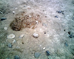 A looter's pit on the morning following its excavation, taken at Rontoy, Huaura Valley, Peru in June 2007. Several small holes left by looters' prospecting probes can be seen, as well as their footprints.