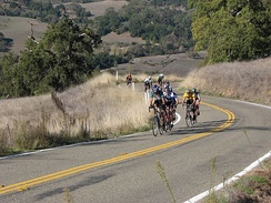 A paceline of drafting cyclists ascending Mount Hamilton in Santa Clara county