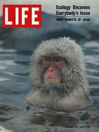 A Japanese macaque on the cover of Life.