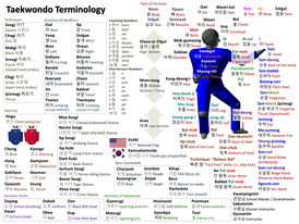 Some common Taekwondo terminology and parts of the body