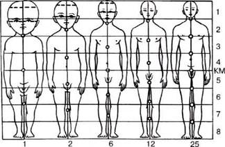 Возрастные изменения пропорций тела. КМ— средняя линия. Цифры справа показывают соотношения частей тела у детей и взрослых, цифры внизу— возраст